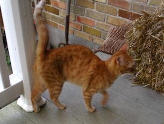 cat found in Roxboro
