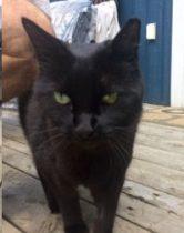 cat found in St Sauveur