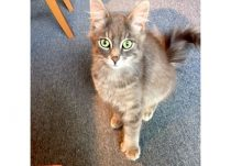 cat found in Terrebonne