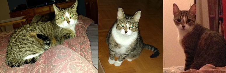 cat lost in Lafleche