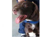 dog found in Ste Dorothee