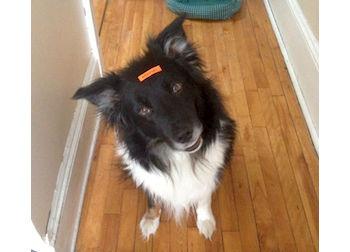dog lost in Hudson