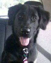 dog lost Terrebonne