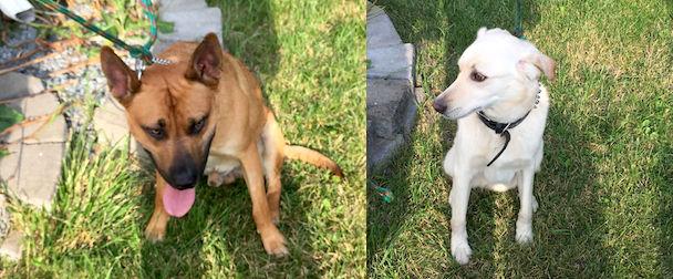 2 dogs found Varennes