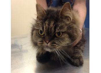 cat found in Hampstead