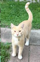 cat found in Hochelaga