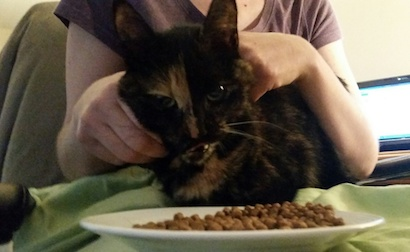 cat found Lachenaie