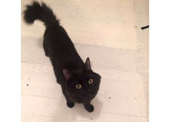 cat found in Mile End