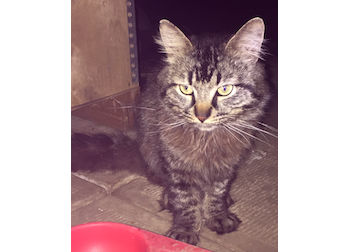 cat found in New Bordeaux