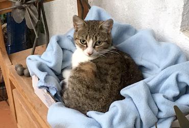 cat found Oka tw