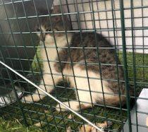 cat found in l'Orignal