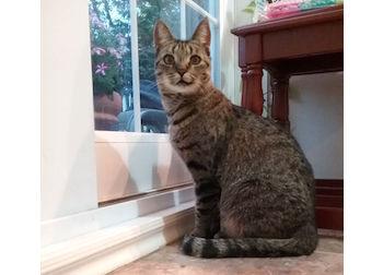 cat found in St Eustache