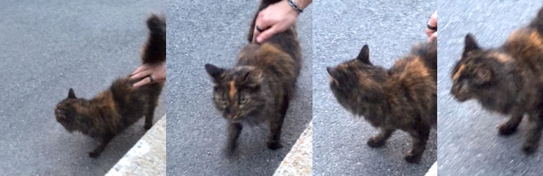 cat found in St Jerome