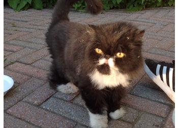cat found in St Sacrament