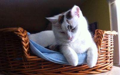 cat lost in CDN