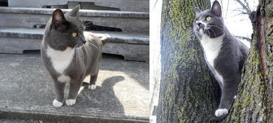 cat lost in Ste Julienne