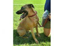 dog found in Lachine