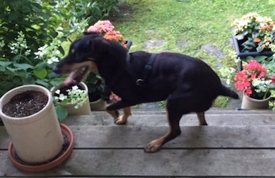 dog found in St Armand