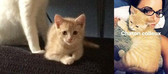 kitten lost in Ste Thérèse