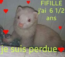 Fifille