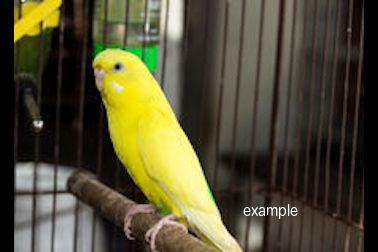 bird found in Anjou