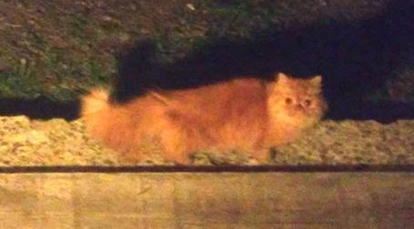cat found Blainville