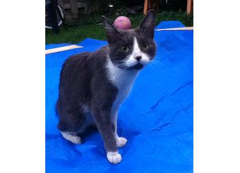 cat found Cote St Pau