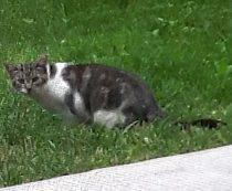 cat found in Gore