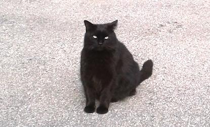 cat found Lachine blk