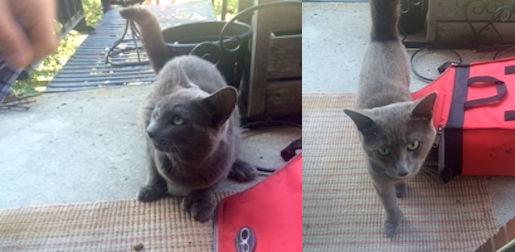 cat found Rosemont