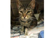 cat found in St-Donat