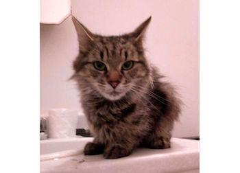 cat found in Ste Thérèse