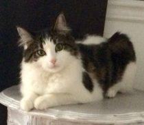 cat lost in Blainville