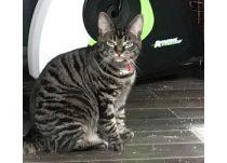 cat lost in St Jean