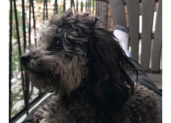 dog lost in Rawdon