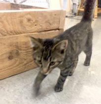 kitten found in Mile Ex