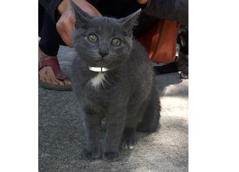 kitten found Rosemont