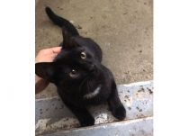 cat found Villeray blk