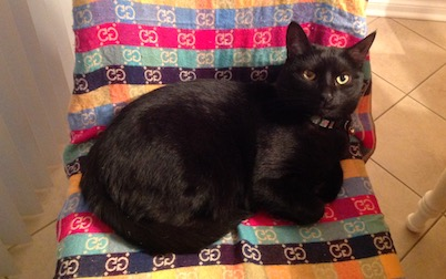 cat lost in Kirkland
