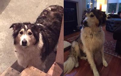dog found in St Sauveur