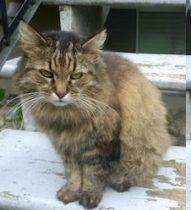cat found Rosemont t