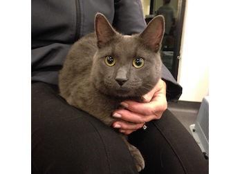 cat found in Senneville