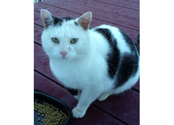 cat found in Chambly