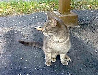 cat found in Legardeur