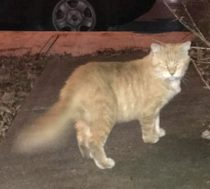 cat found in PAT