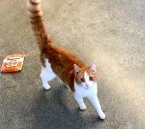 cat found in Sorel-Tracy