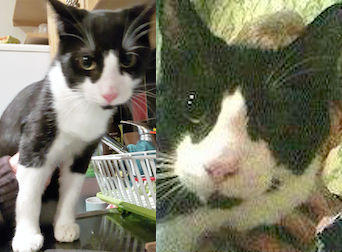 cat found in St Michel
