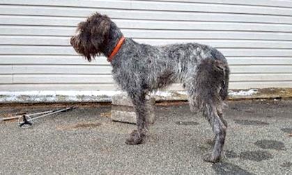 dog found in Brownsburg