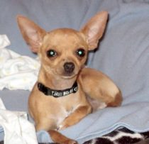 dog lost Duvernay chi