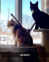 2 cats lost in Ste Therese